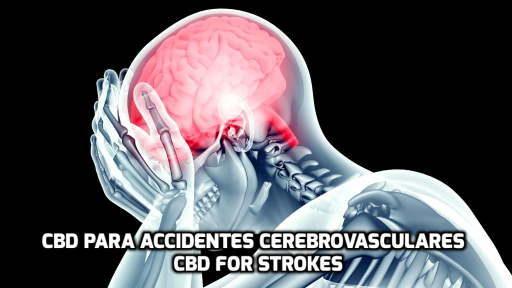 El CBD para Accidentes Cerebrovasculares